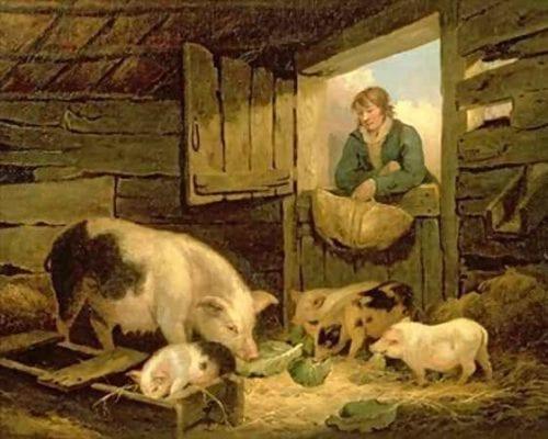 Хлев для свиней