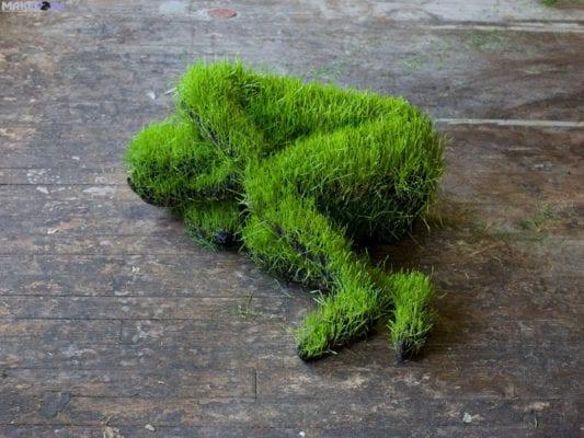 человек-газон