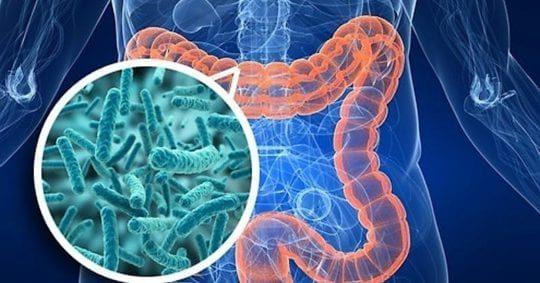 Чистка организма от шлаков и токсинов— продли себе жизнь
