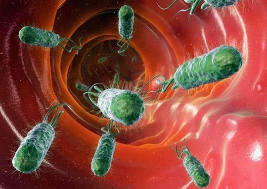 лазутчики бактерии
