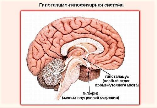 Дисфункция гипоталамно-гипофизарной системы