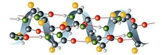 белок аминокислота