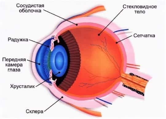 глаза устройство