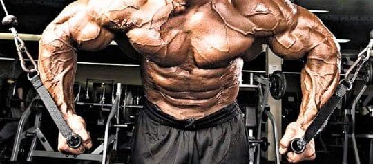 мышцы и гликоген