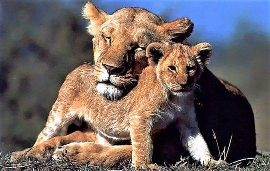 самка защищает своё потомство