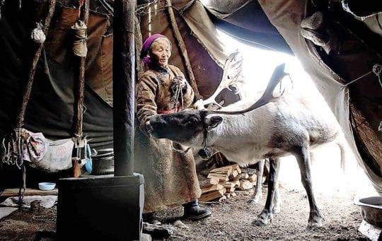 кочевники и домашний скот
