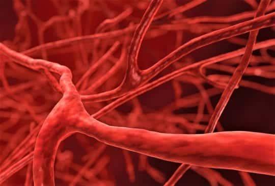 ток крови в сосудах