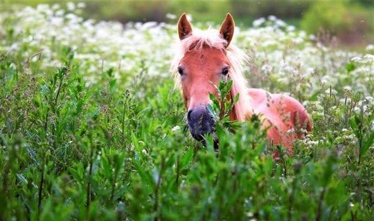 лошадка кушает травку