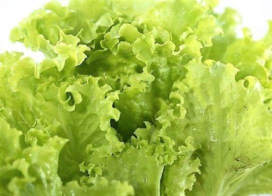 клетчатка листья салата