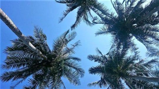 пальмы на небе