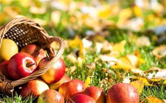 яблоки осень