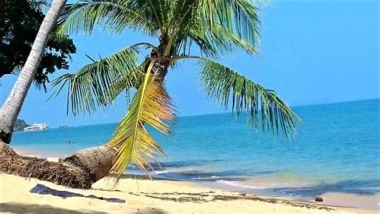 пальма и корабль