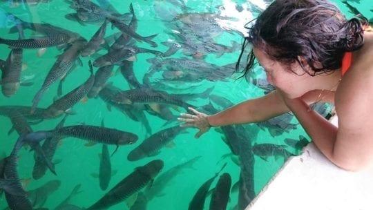 рыба на озере чео лан