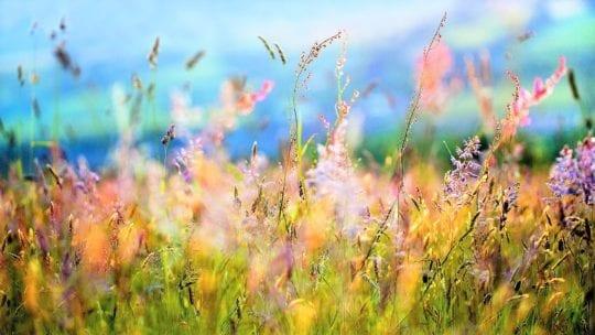 травы и монастырский чай