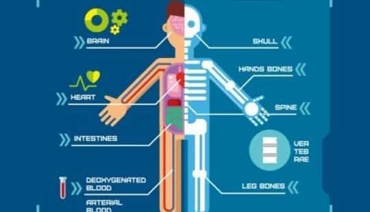 Биологически активные точки: электропунктурная диагностика с RaDoTech