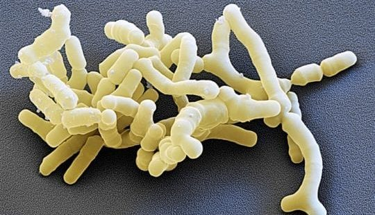 Роль лакто и бифидобактерий— невозможно переоценить!